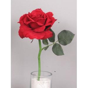 Роза короткая Королева Анна, красная
