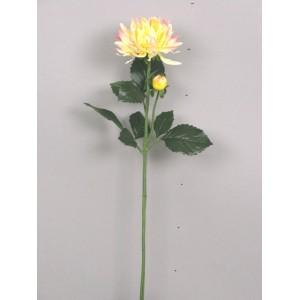 Георгин  желто-розовый, 75 см