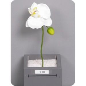 Фаленопсис на ножке/орхидея, ветка, кремовый