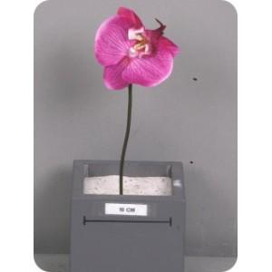 Фаленопсис на ножке/орхидея, ветка, фуксия