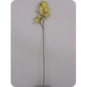 Аренда Цветок Цимбидиум Лизан зеленый, 70 см