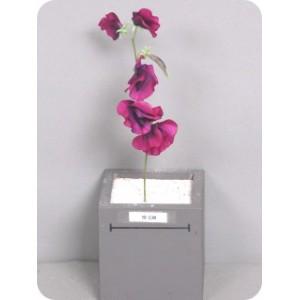 Душистый горошек, фиолетовый, 30 см
