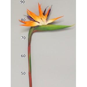 Аренда Цветок Стрели́тция короле́вская большая, оранжевая, 95 см