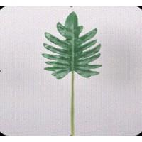 Лист филодендрона изящного, 58 см