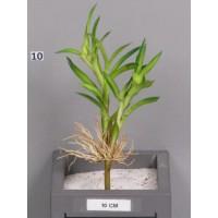 Зеленое растение Cazwa 25 см