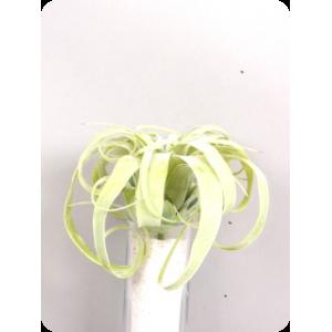 Аренда  искусственных растений Тилляндсия большая, зеленая, 20 см