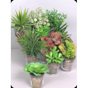 Аренда  искусственных растений Кактусы, микс, на поддоне в горшках, 12 штук, 8 см