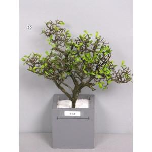 Ветка чайного дерева, зеленая
