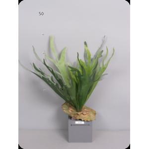 Аренда  искусственных растений Платицериум (Оленьи рога), зеленый, 50 см