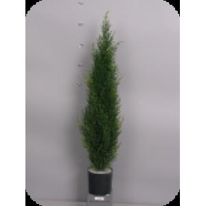 Аренда  искусственных растений  Туя зеленая, 90 см (защита от ультрафиолета)