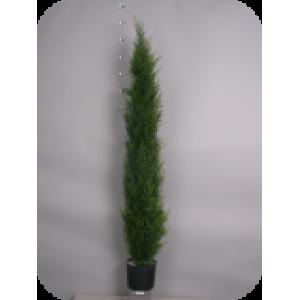 Аренда  искусственных растений  Туя зеленая, 150 см (защита от ультрафиолета)