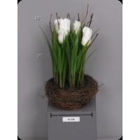 Тюльпаны белые в гнезде