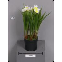 Нарцисс мелкий белый в пластиковом кашпо