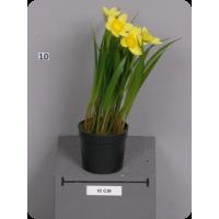 Нарцисс мелкий желтый в пластиковом кашпо