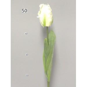 Тюльпан Дентон, белый, 62 см