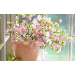 Душистый розовый горошек