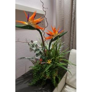 """Композиция """"Экзотические растения"""".  В состав входят: кашпо, стрелиция, папоротник, агапандус, платицериум, седум, анигозантус"""