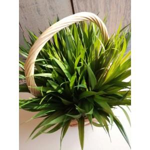 Единичная трава, 144 шт, 17 см