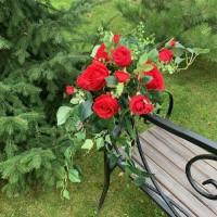 """Композиция """"Красные розы Латина с зеленью"""""""