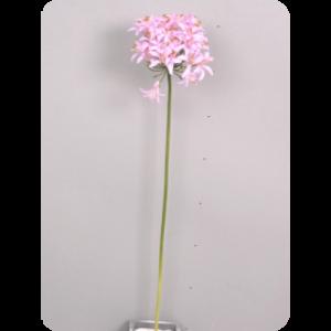 Агапантус, розово-лиловый, 62см