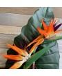 Стрелиция королевская большая, оранжевая, 95 см